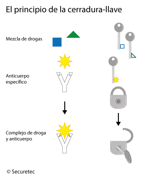 Le principe de la serrure et de la clé des tests immunochromatographiques
